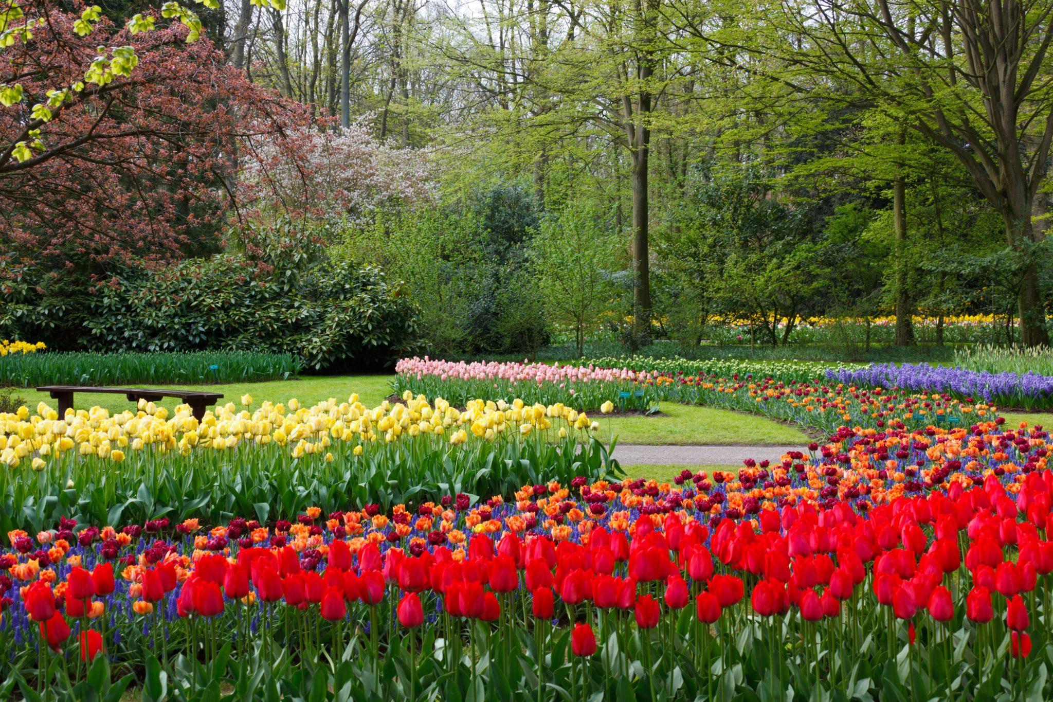 at_keukenhof_gardens