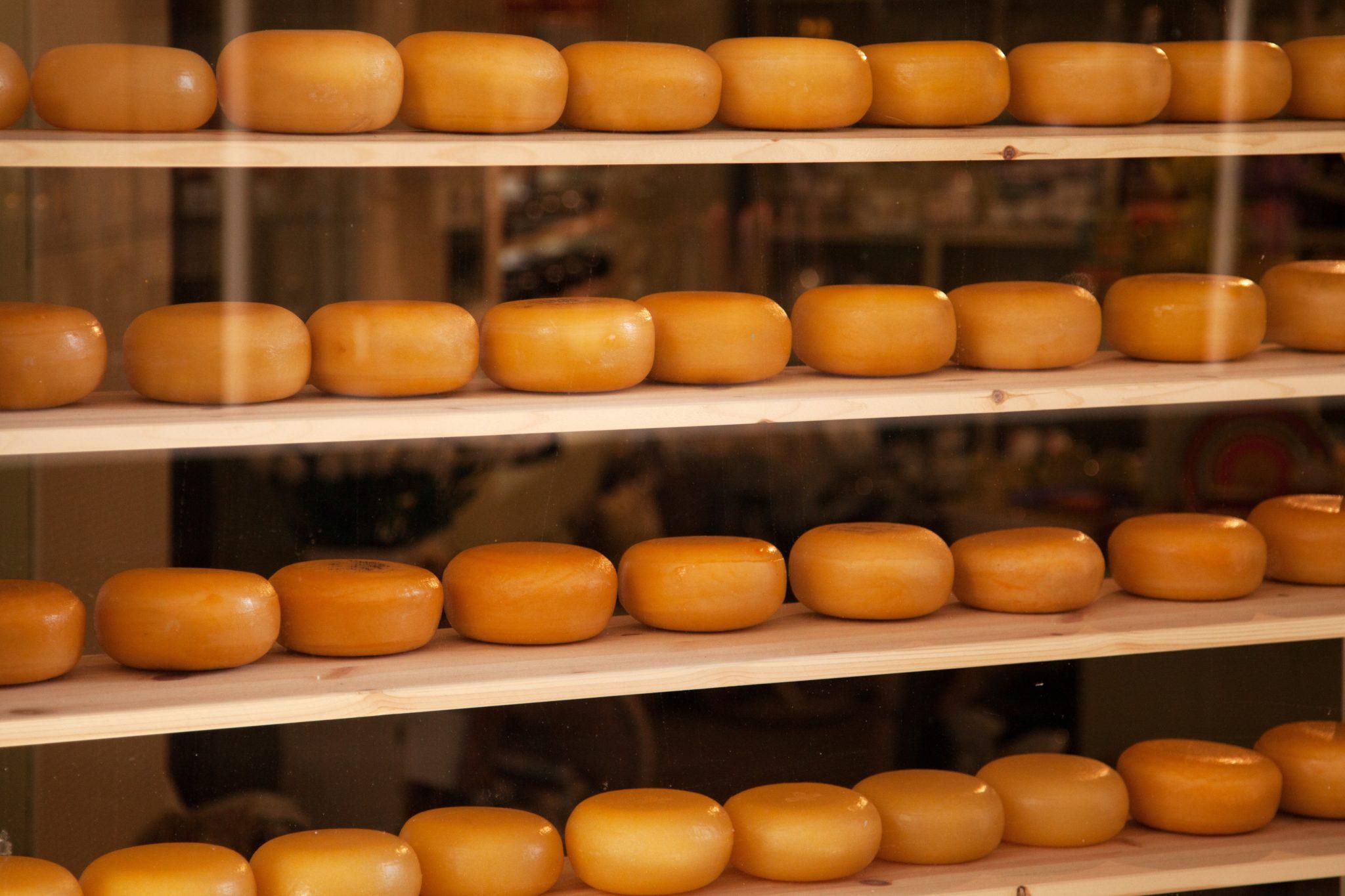 dutch_cheese