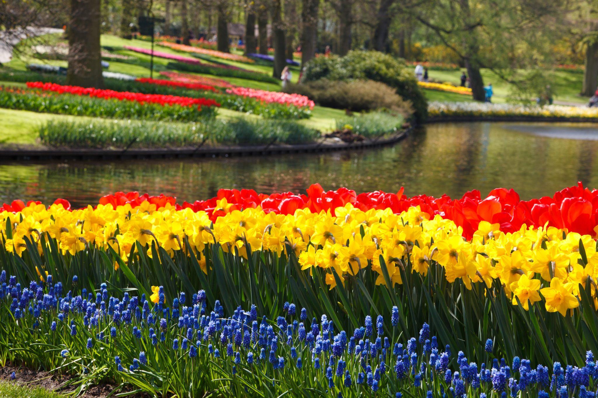 keukenhof_flower_gardens